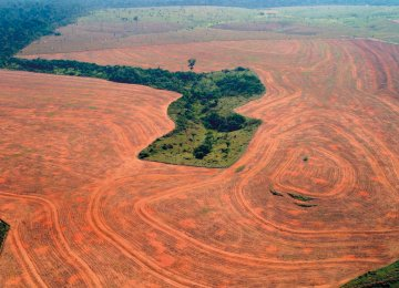 After several years of decline, deforestation in the Amazon appears to be increasing again.