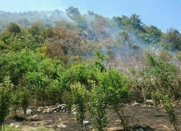 Fire Razes Section of Tonekabon Forest