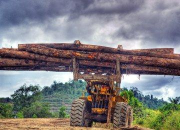 MPs Scrap  Anti-Forest Measure