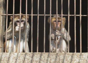 "Mass Euthanasia of Colorado Animals ""Horrific"""