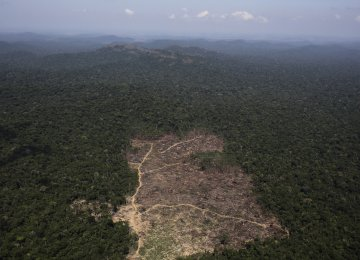 Deforestation  Up 57% in  Brazil's Forest