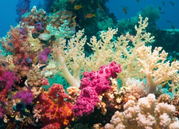 Southern Corals Under Threat