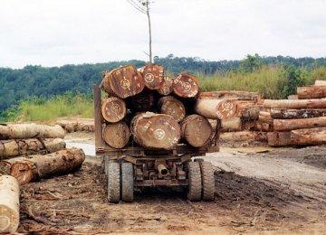 Deforestation-Economic Growth Link Confirmed