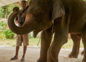 Expedia Joins Anti-Elephant Tourism Movement