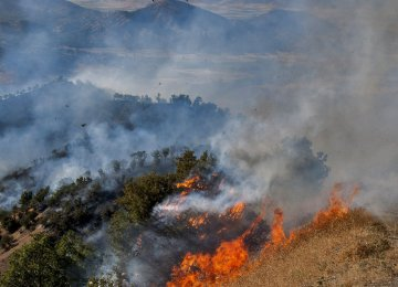 On average, forest fires inflict losses worth about $85.3 million.