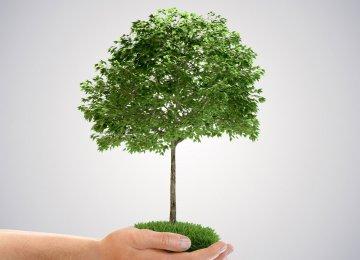 """Trump Forest"" Scheme to Combat US Emissions"