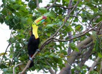 Birds that dwell in wetter rainforests are the most at risk.
