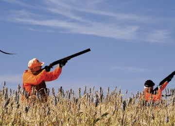 Twelve out of 34 permits were granted to foreign hunters last year.