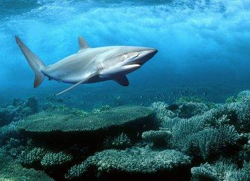 Global Partnership to Help Save Ocean Life at Davos