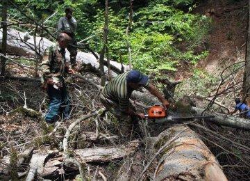 Gov't to Revoke  15 Logging Licenses