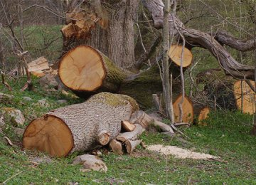 Zagros Oak Forests Under Attack of Illegal Loggers