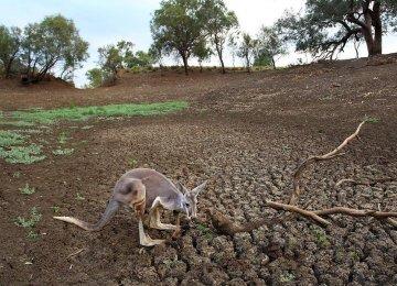 Australia Drought Could Cost $12 Billion