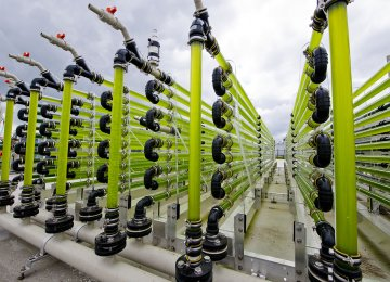 Algae bioreactor at AlgaeParc in Wageningen, Netherlands.