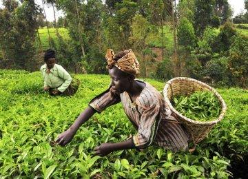 Kenya Predicted to Grow 6.2%