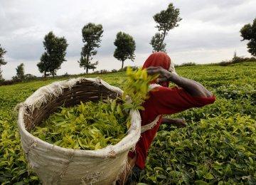 Kenya Cuts Growth Forecast