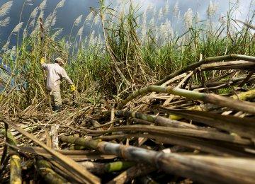 Mauritius Trade Deficit Widens