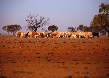 More Aid for Australia's Drought-Hit Farmers