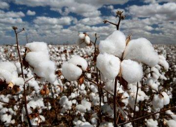 Unsold Cotton