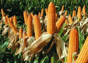 Drought Threatens Argentina Economic Performance