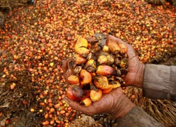 Indonesia and Malaysia jointly account for 82 percent  of global palm oil output.