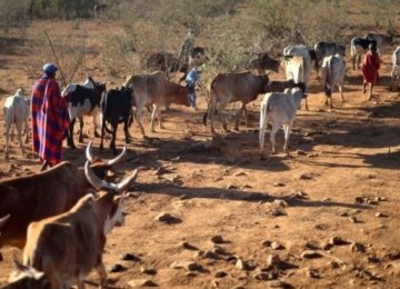 Kenya is experiencing its worst drought in more than three decades.
