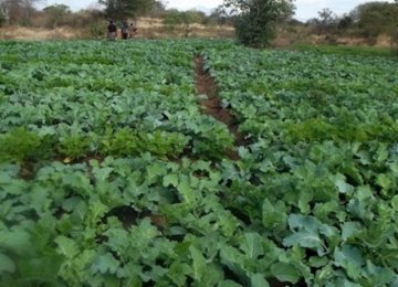 Sudan has vast areas of cultivable agricultural land.
