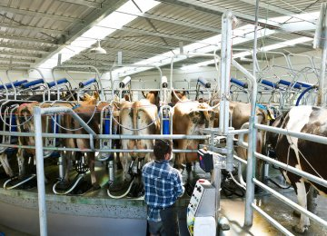 A recovery in dairy prices is revitalizing a moribund rural sector.