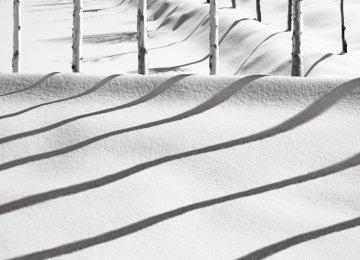 A photo from the'Snow' series by Kiarostami