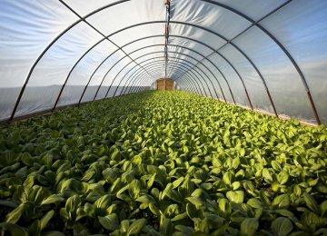 Q1 Agrifood Exports Hit $1.2b