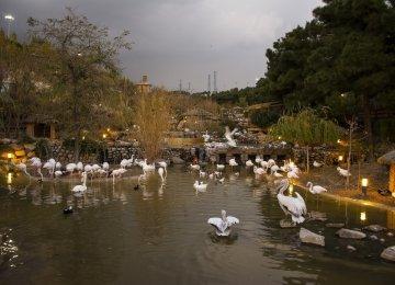 Bird Garden in Lavizan