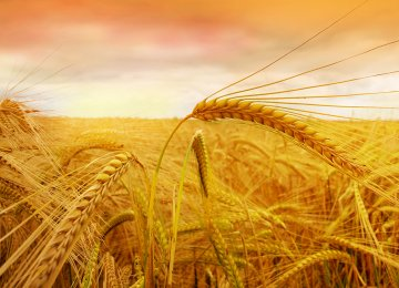 Wheat Imports: Good or Bad?