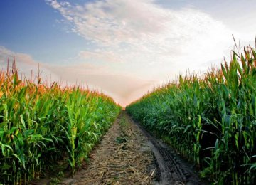 Gov't Plans Self-Sufficiency  in 8 Staple Crops