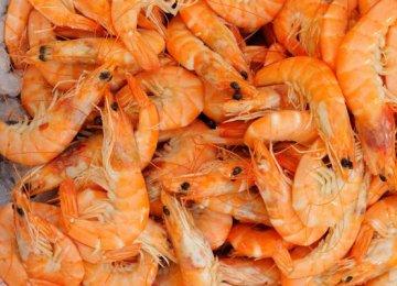 Shrimp Fishing Season