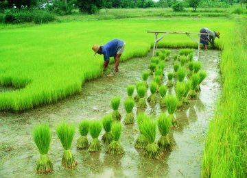 CBI Supports Agriculture Sector