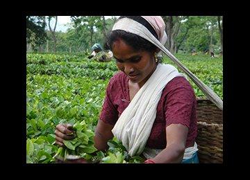India Tea Export