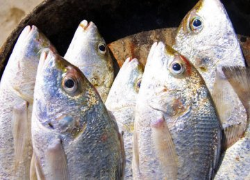Seafood production is expected to surpass 1 million tons this year.