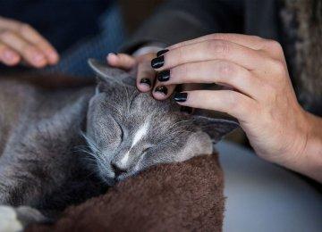 First Detection of Cat to Human Bird Flu