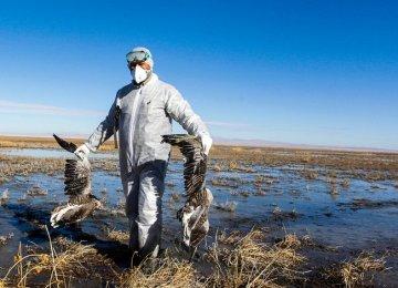 More Birds Die of Avian Flu