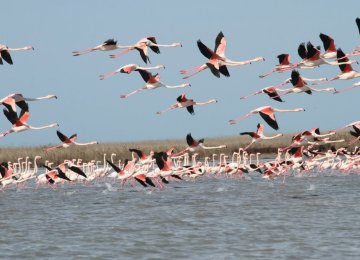 Birdwatching tours have helped drive tourists to northern provinces.
