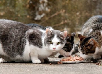 Stray animals grow dependent on humans if fed constantly.