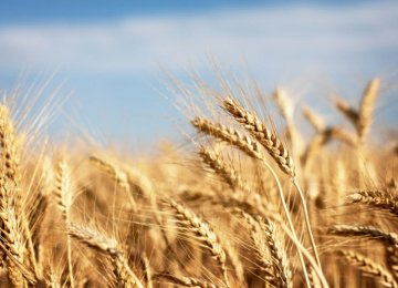 Wheat Exports to Neighboring States