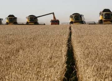 Harvesting wheat in Russia.