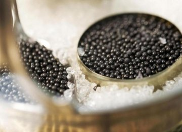 Caviar Production to Increase