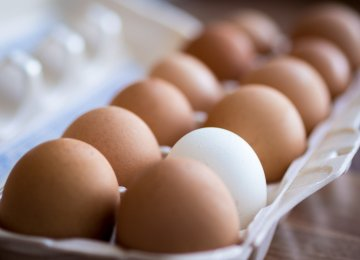 Egg Export Markets Mostly Lost