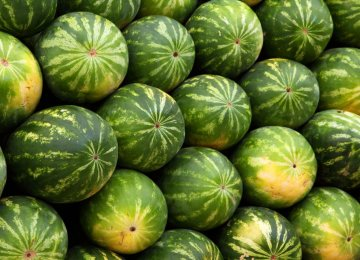 Watermelon Exports
