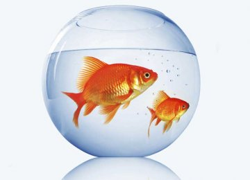 Keep Your Goldfish Happy