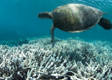 Coral Reefs Dying Out