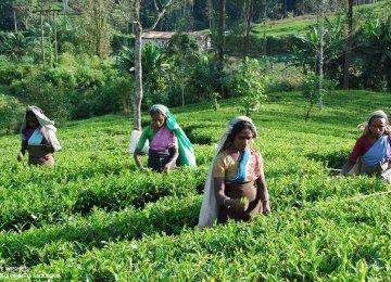 Lanka Trade Deficit Up