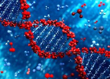 Pre-Marriage Genetic Test Mandatory