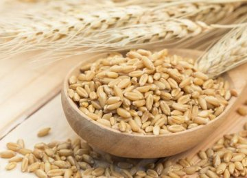 Barley Cultivation to Increase
